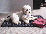 Охлаждающий коврик для кошек и маленьких собак АйсДей Дог