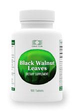 Листья Черного Ореха / Black Walnut Leaves