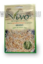 Семена пшеницы Виво